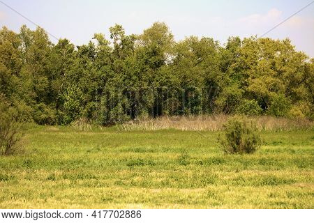 Lush Grassy Field Surrounded By A Riparian Deciduous Forest Taken At A Prairie In The North American