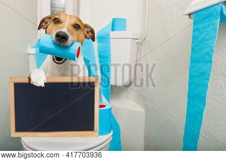 Jack Russell Terrier, Sitting On A Toilet Seat With Digestion Problems Or Constipation Holding A Ban