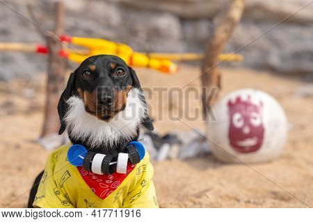Funny Dachshund Puppy With Thick Beard And Necklace Of Plastic Caps Around Neck Has Long Lived On De