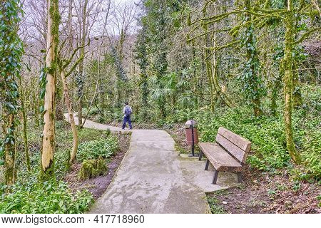 Wooden Bench, Resting Place Among Relict Trees. Yew-boxwood Grove, Caucasian Biosphere Reserve, Russ