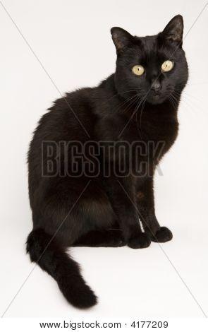 Little Black Cat 01