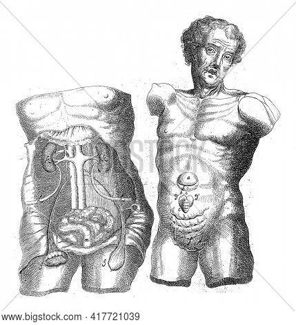 Anatomical study of two hulls, Wilhelmus ten Rhijne, 1670 - 1672
