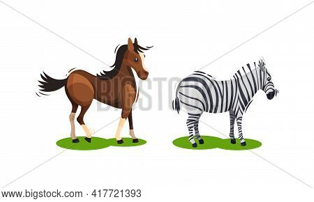 Horse And Zebra With Crest Grazing On Green Field Vector Set