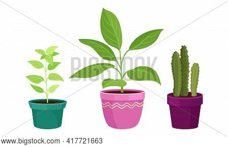 Tropical Or Semi-tropical Houseplant Growing In Potting Soil In Ceramic Flowerpot Vector Set