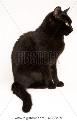 Little Black Cat 03