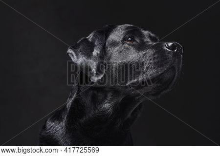 Human Companion And Best Friend In Dark Background