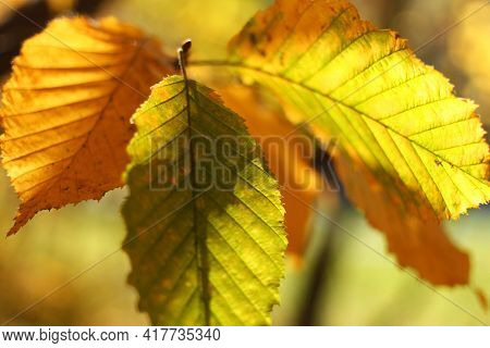Yellow Leaves On Tree Closeup Unforgettable Landscape