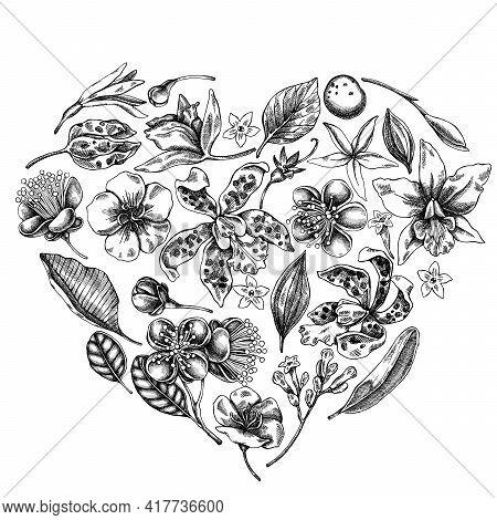 Heart Floral Design With Black And White Laelia, Feijoa Flowers, Glory Bush, Papilio Torquatus, Cinc