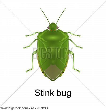 Stink Bug Vector Icon.realistic Vector Icon Isolated On White Background Stink Bug.