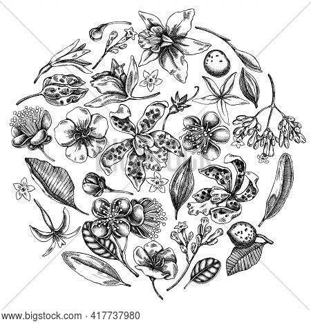 Round Floral Design With Black And White Laelia, Feijoa Flowers, Glory Bush, Papilio Torquatus, Cinc