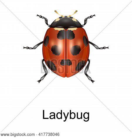 Ladybug Vector Icon.realistic Vector Icon Isolated On White Background Ladybug.