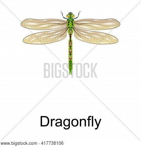 Beetle Dragonfly Vector Icon.realistic Vector Icon Isolated On White Background Beetle Dragonfly.