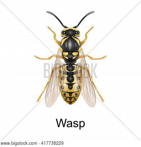 Beetle Wasp Vector Icon.realistic Vector Icon Isolated On White Background Beetle Wasp.