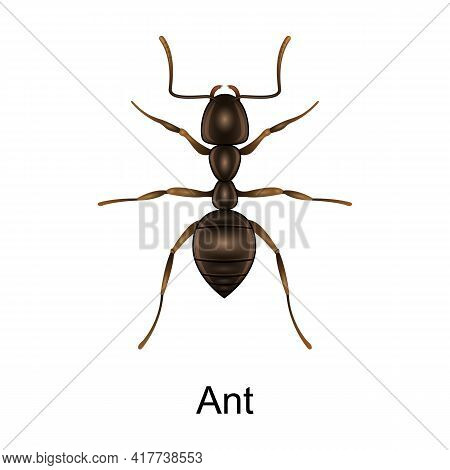 Beetle Ant Vector Icon.realistic Vector Icon Isolated On White Background Beetle Ant.