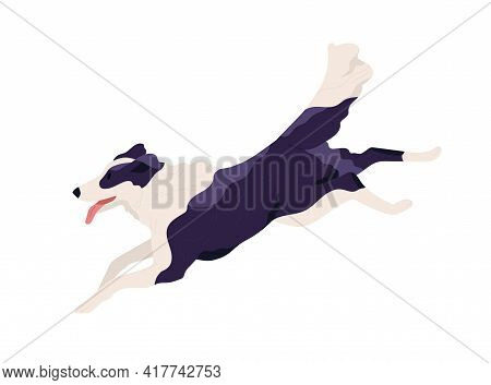 Purebred Border Collie Running Fast And Chasing Smb. Shepherd Dog Rushing With Tongue Hanging Out. D