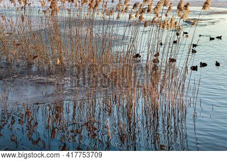 Plants and ducks on a frozen lake
