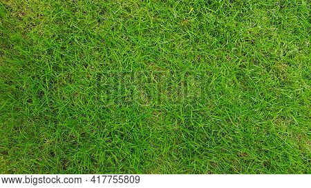 Green Grass Field For Background Or Land, Surface, Lawn, Natural Wallpaper And Playing Sport Game Ar