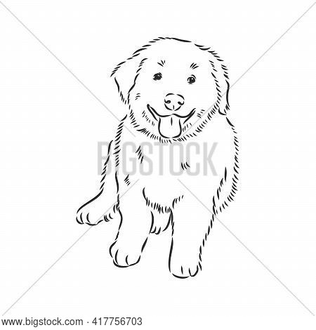 Close-up Portrait Of Sitting Dog. Vector Engraved Art. Friendly Smiling Puppy Isolated On White Back
