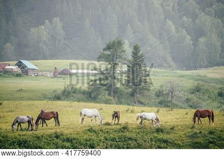 Beautiful Horses Graze In Countryside Among Trees On Background Of Mountain With Forest. Wonderful M