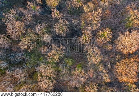 Top view of deciduous tree forest in the beginning of spring