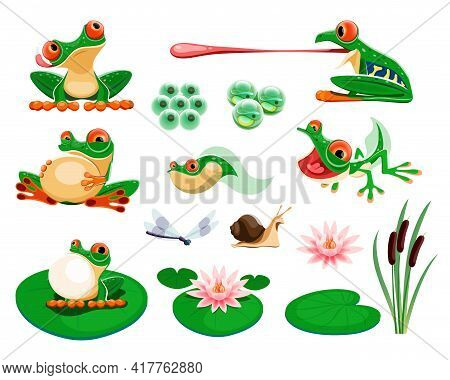 Frogs With Water Lily Leaves And Flowers, Reed, Dragonfly, Snail. Amphibian Life Cycle, Eggs, Tadpol