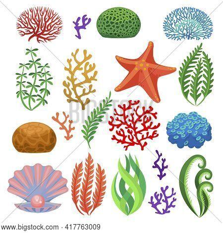 Seaweeds. Cartoon Colorful Underwater Reef Corals, Plants. Aquarium, Ocean And Undersea Flora, Starf