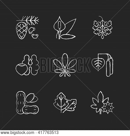 Allergens And Allergy Causes Chalk White Icons Set On Black Background. Cedar, Pine Tree Pollen. Pea