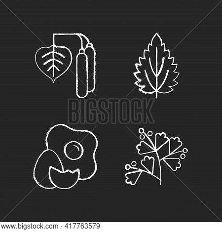 Intolerance For Allergen Chalk White Icons Set On Black Background. Birch Pollen. Nettle Leaf. Crack