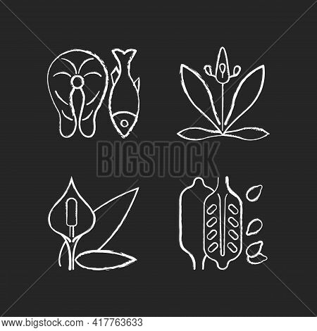 Common Allergens Chalk White Icons Set On Black Background. Fish As Cause For Allergy. English Plant