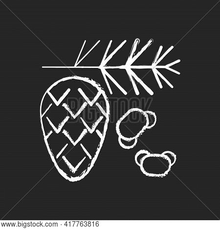 Cedar And Pine Tree Pollen Chalk White Icon On Black Background. Branch With Needles, Fir Cone. Comm