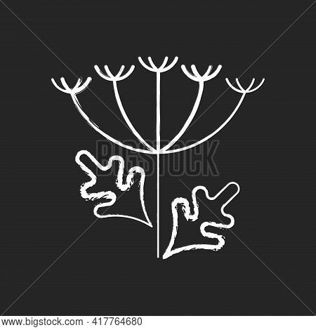 Queen Annes Lace Chalk White Icon On Black Background. Blooming Wildflower. Wild Carrot Flower. Alle