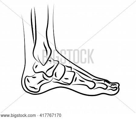 Human Leg And Joints. Symbol. Vector Illustration.