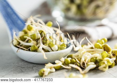 Sprouted green mung beans. Mung sprouts in spoon on kitchen table.