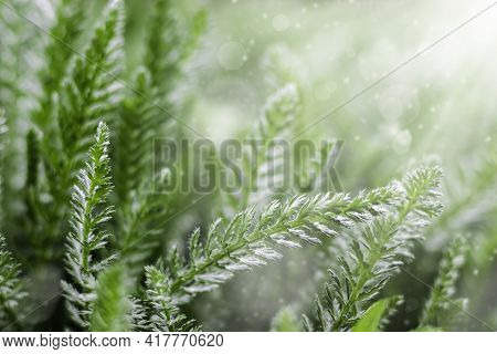 Summer Or Spring Background With Fresh Green Grass With Sunbeams. An Image Of Purity And Freshness O