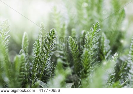 Spring Background Or Summer Background With Fresh Grass And Sunbeams. An Image Of Purity And Freshne