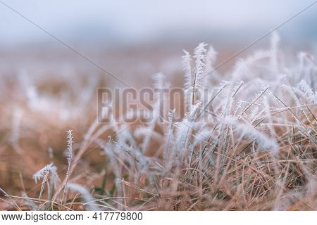 Grass Meadow Nature Covered In Icy Droplets Of Morning Dew. Foggy Winter Weather, Blurred White Land