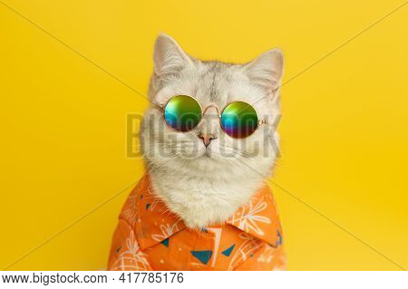 Portrait Of White British Cat Are Wear Sunglass And Shirt In Concept Summer On The Yellow Background