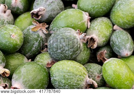 Green Ripe Feijoa Fruit On The Market Counter. On Top Is A Pile Of Fresh Ripe Feijoa Fruits Sold In