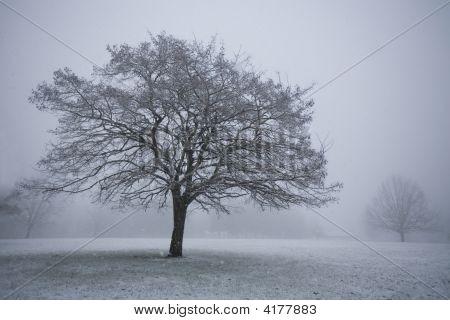 Snowy Tree In Field