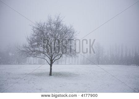 Snowy Tree In An Empty Field