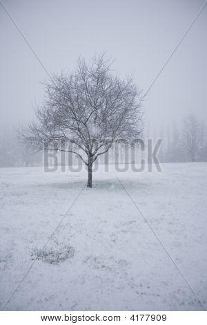 Lonely Snowy Tree In An Empty Field