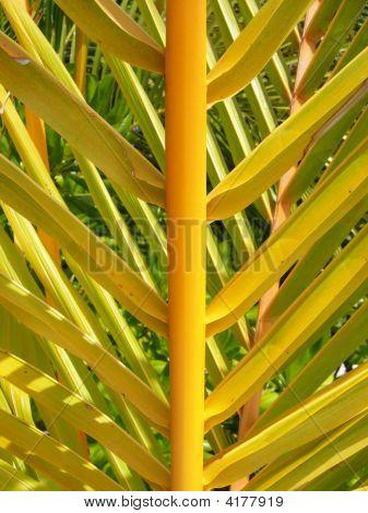 Close Up Palm Leaf