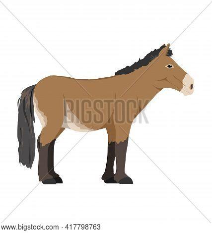 Equus Ferus Przewalskii - Przewalskis Horse - Side View - Flat Vector Isolated