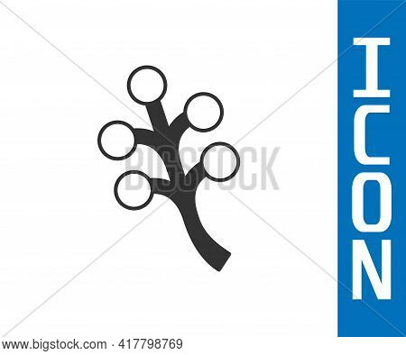 Grey Blossom Tree Branch With Flowers Icon Isolated On White Background. Vector