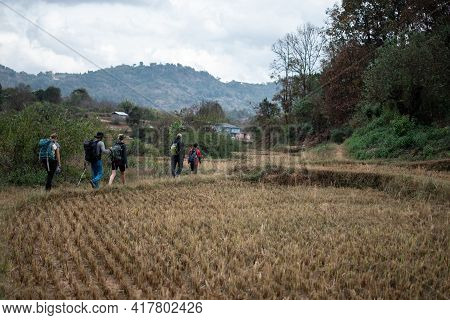 Shan State, Myanmar - January 5 2020: A Tourist Group Hike Through Rice Fields And Farm Lands From K