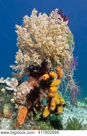 A Block Of Corals Of Different Shapes And Colors, Orange Sponges And Colorful Lilies. On Top Is A La