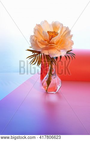 Peony Flower On Neon Pink Purple Background. Single Flower In Glass Vase. Light Background With Sing