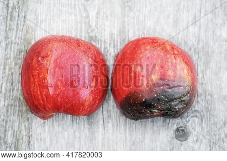 A Concept Image Of A Half-ripe Red Apple, Showing The Various Stages Of Development. Fungal Diseases