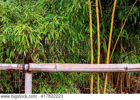 Bamboo, Green Leaves On A Cloudy Day, Handrail With Bamboo Tree