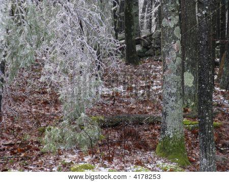 Woods - Ice Storm